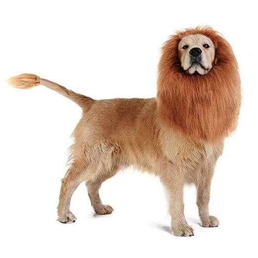 Meglio leone per un giorno o cane tutta la vita?? Fallo decidere al tuo super cane! Portalo in giro e fallo sentire il Re dell'isolato! circa 39€ ma in sconto!