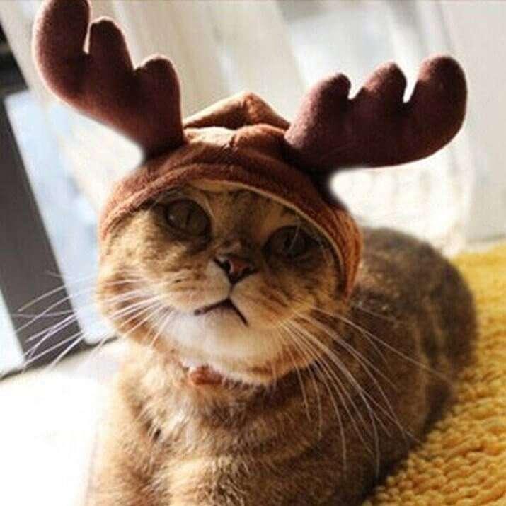 Costume per gatto renna! Fai che il tuo gatto partecipi alle feste in maniera adeguata! Non lasciarlo solo con la sua ciotola! E poi fai che si guardi alle specchio e...circa 11€