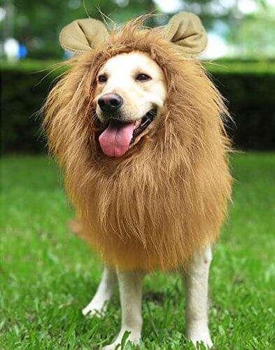 Maschera leone per il tuo cane, fai sentire Fuffi un gran leone per un giorno o due, ne beneficierà anche la sua reputazione nel quartiere... 9€ ⌁
